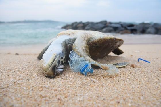 Ocean Plastic Waste Is Spreading Beyond the Oceans